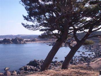 tanesashi01.jpg